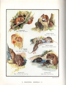 Plate 3: Gnawing animals II