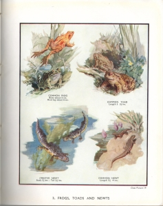 Plate 3: Frogs, Toads and Newts