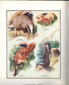Plate 4: Flesh eating animals