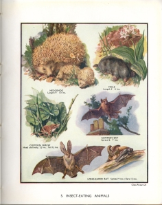 Plate 5: Insect eating animals