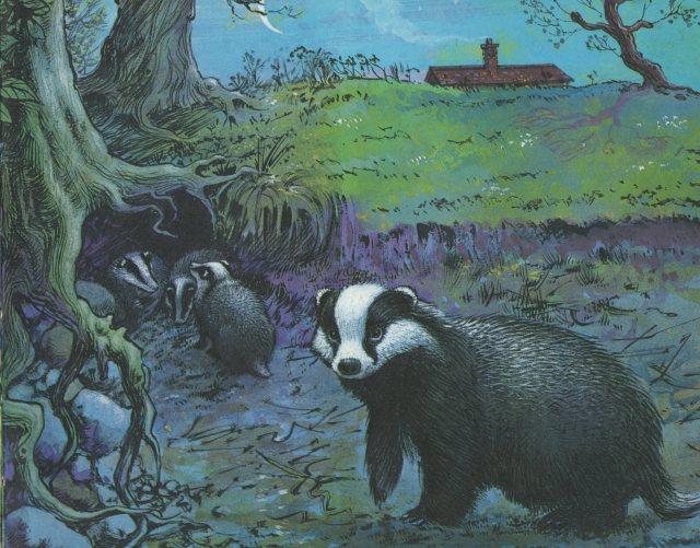 p.7 Badger