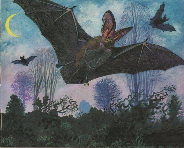 p.9 Bat