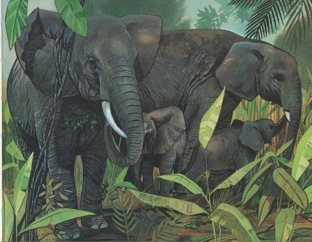 p.21 Elephant
