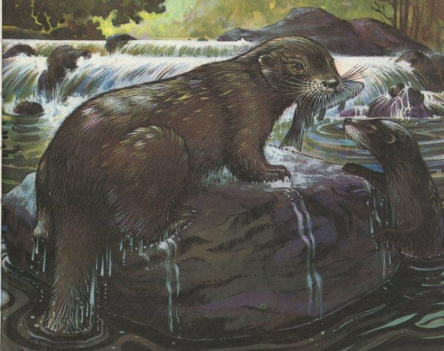 p.53 Otter