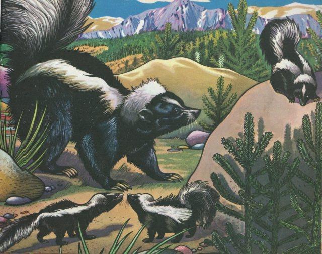 p.71 Skunk