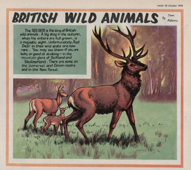 Swift 'British Wild Animals' 18 Oct 1958