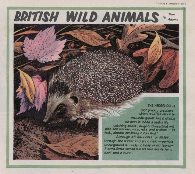 Swift 'British Wild Animals' 6 Dec 1958
