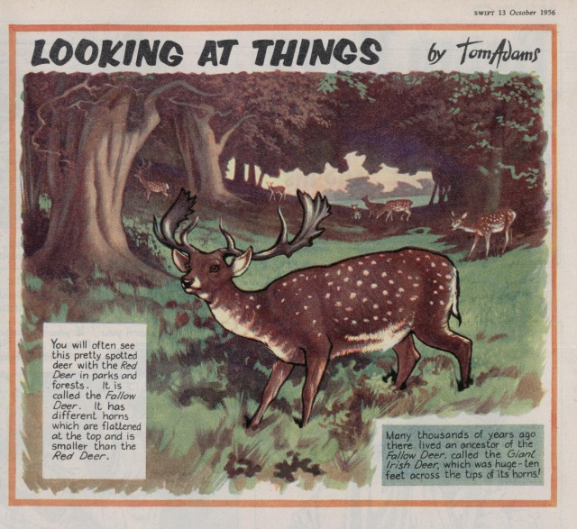 Swift 'Looking At Things' 13 Oct 1956