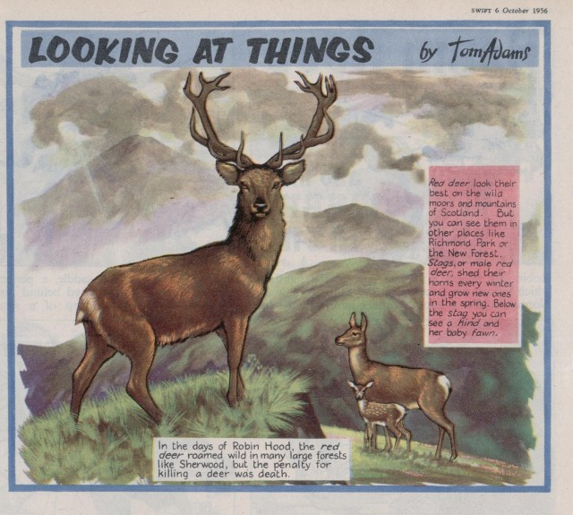 Swift 'Looking At Things' 6 Oct 1956 [i]