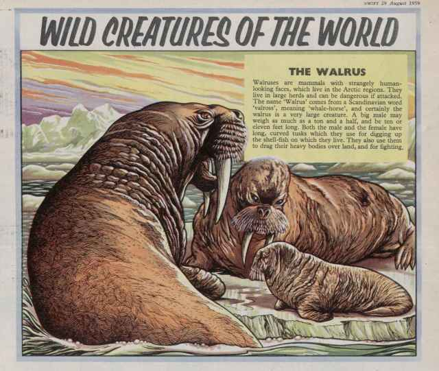 Swift ' Wild Creatures...World' 29 Aug 1959