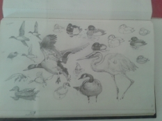 Bird sketches by Thelwell